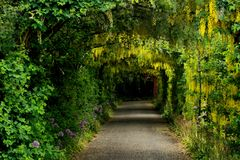 Free Flower Alley In A Park Stock Images - 89781184