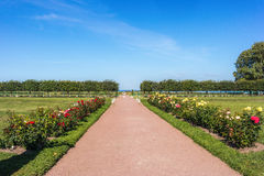 Flower alley in Peterhof. Flower Alley in the Western Part of The Lower Park in the Peterhof State Museum Preserve Stock Images