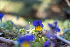 The flower alone royalty free stock images