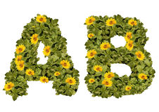 Flower Alphabet A-B Flowers Yellow on green lettering Royalty Free Stock Photos