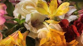 Flower alstroemeria attentive spring water greetingrain, gardening rose. Flower alstroemeria water rain rose greeting gardening attentive spring stock video footage