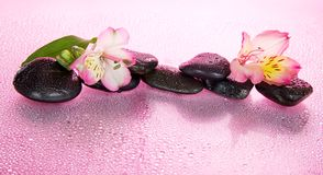 Flower of an alstroemeria and stones in water Stock Photo