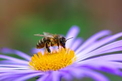 Free Flower And Bee Stock Photos - 5474233