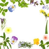 Flower And Herb Leaf Abstract Stock Photography