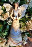 Flower angel, photographed in South Africa