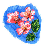 Flower  apple. Blossoming apple branch on a background of sky. Figure felt-tip pens Stock Photo
