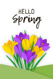 Flower applique banner paper flowers crocuses. Spring Banner with colored paper flowers and an inscription. Flowers yellow and purple crocuses with leaves grown Stock Photos