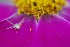 Flower and araneid. Flower in the garden like a angel Royalty Free Stock Image