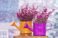 Flower arranged on the mini watering can Royalty Free Stock Images