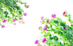 Flower arrangement Royalty Free Stock Images
