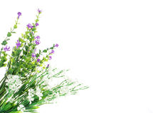 Flower arrangement Royalty Free Stock Photography