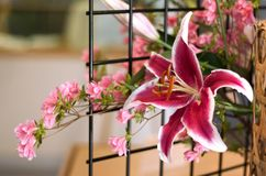 Flower arrangement. Flower postcard Stock Image