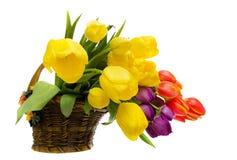 Flower arrangement. Tulip flower arrangement in a basket Stock Photos
