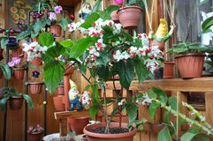 Flower arrangement on the balcony. Beautiful flower arrangement on the balcony with three little gnome stock photo