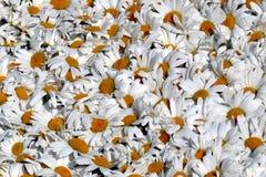 Flower arrangement Royalty Free Stock Photos