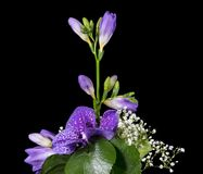 Flower arrangement of a blue vanda Stock Image