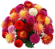 Flower arrangement of chrysanthemums and dahlias Stock Image