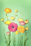 Flower arrangement of colorful ranunculus Royalty Free Stock Photos