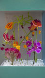 Flower arrangement. Contemporary in a show case Royalty Free Stock Image