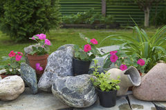 Flower arrangement in the garden. Composition with flowers and stones in the garden Stock Photos