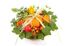 Flower arrangement for halloween Stock Photos