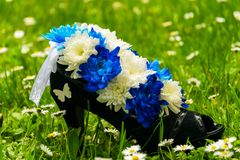 Flower arrangement in high-heeled shoes. Flower arrangement of blue and white chrysanthemums in high-heeled shoes. Sunny spring day stock photos