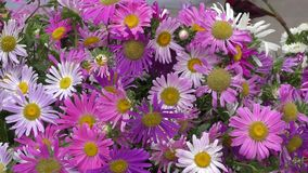 Flower arrangement. stock footage