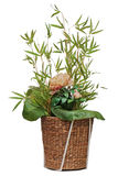 Flower arrangement of peon flower, lotus leaf and twigs of bamboo. stock image