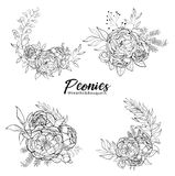 Set of bouquets peonies. Flower arrangement with peonies. Spring and summer bouquet. Vector design elements.Black and white. Engraving Royalty Free Stock Image