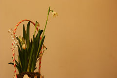 Flower arrangement with snowdrops, Galanthus nivalis, closeup view. Stock Photos