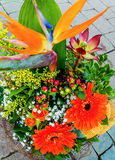 Colorful arrangement with Strelitzia, Mimosa and Gerbera Royalty Free Stock Images