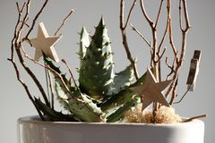 Flower arrangement of succulents and twigs with decoration on grey background. Contrast light. Flower arrangement of succulents and twigs with decoration on the stock photography