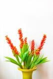 Flower arrangement in vase Stock Image