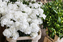 Flower arrangement with white carnations Royalty Free Stock Photo
