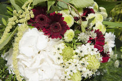 Flower arrangement with white hydrangea and red gerbera Stock Photos