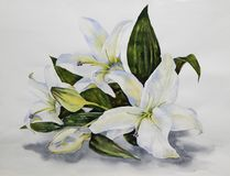 White lilies on the table. Flower arrangement. White tender lilies fell on the white table. Watercolor Stock Photos
