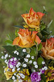 Flower arrangment Royalty Free Stock Images