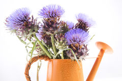 The Flower Of The Artichoke Stock Image