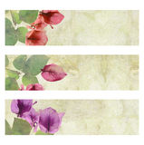 Flower Artwork Banner Set Isolated Stock Photos