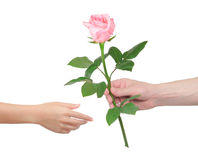 Flower as a gift. Man gives the woman a rose stock photography