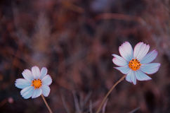 FLOWER. Asian flowers blooming in spring Stock Images