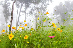 Flower and autumn foggy morning landscape and meadow on the moun Royalty Free Stock Image