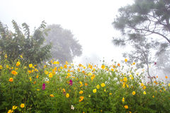Flower and autumn foggy morning landscape and meadow on the moun Royalty Free Stock Photography