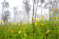 Flower and autumn foggy morning landscape and meadow on the moun Stock Photo