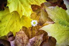 Flower and autumn leaves Stock Photo