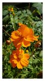 Flower autumn Royalty Free Stock Images