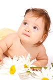 Flower  baby Stock Photos