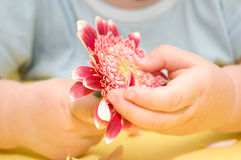 A flower in baby's hands Stock Photos