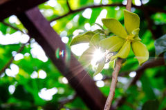 Flower. Baby tooth flower tree vegetation flora, plant Royalty Free Stock Photo