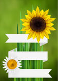 Flower bacgkround with ribbon. Daisy and sunflower,  with empty space for text Stock Photography